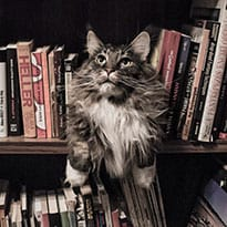 Cat with Books