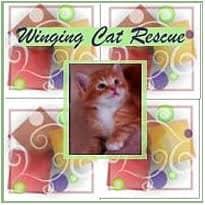 Adoptions at McDonough Petsmart @ Petsmart in McDonough | McDonough | Georgia | United States