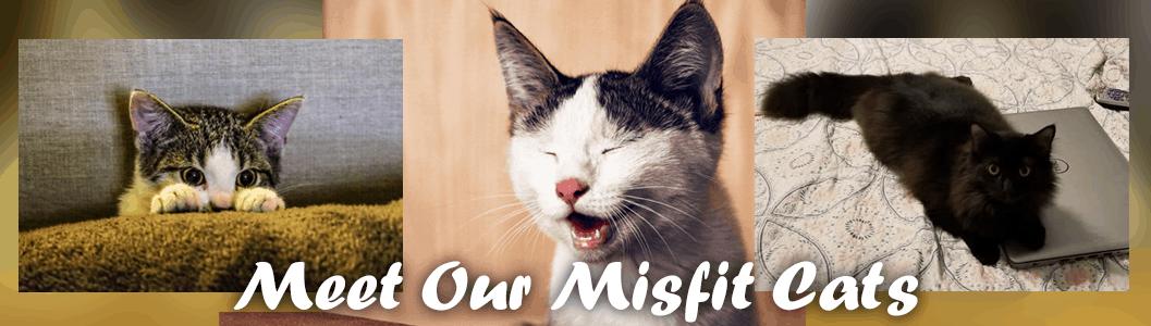 Meet Our Misfit Cats