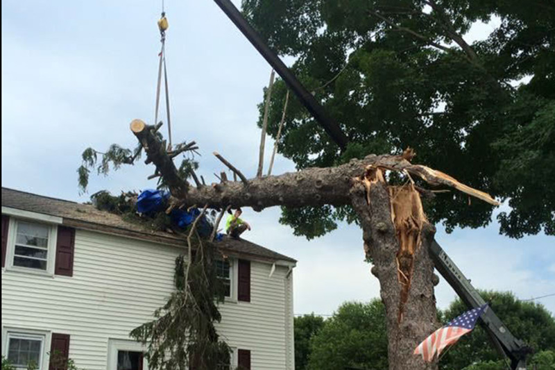 Tree Removal From Roof