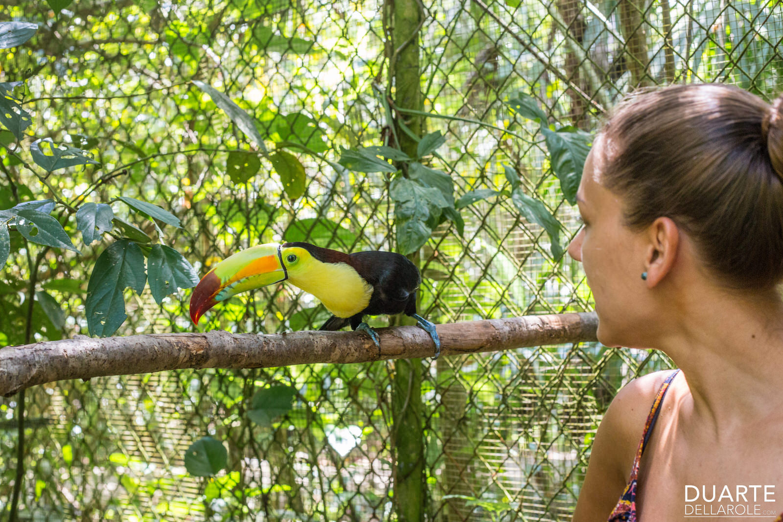 The Belize Zoo Photo 1