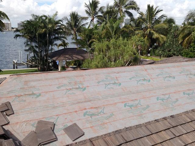 Sharkskin Ultra SA North Palm Beach