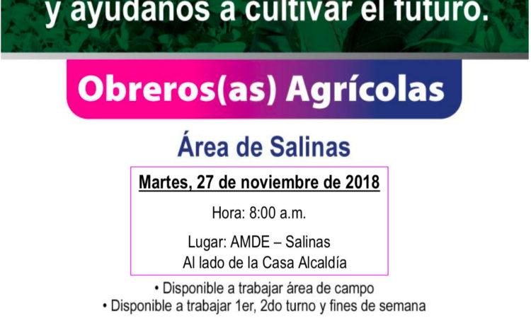 Oportunidad de Empleo, Obreros(as) Agrícolas Área de Salinas