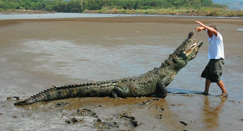 crocodile-tour-4