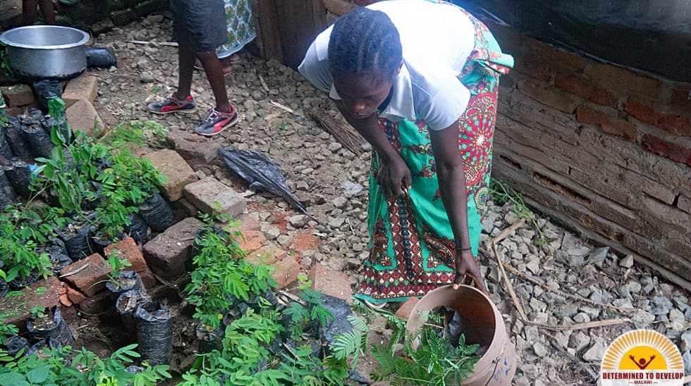 Determined to Develop Malawi Reforestation 2