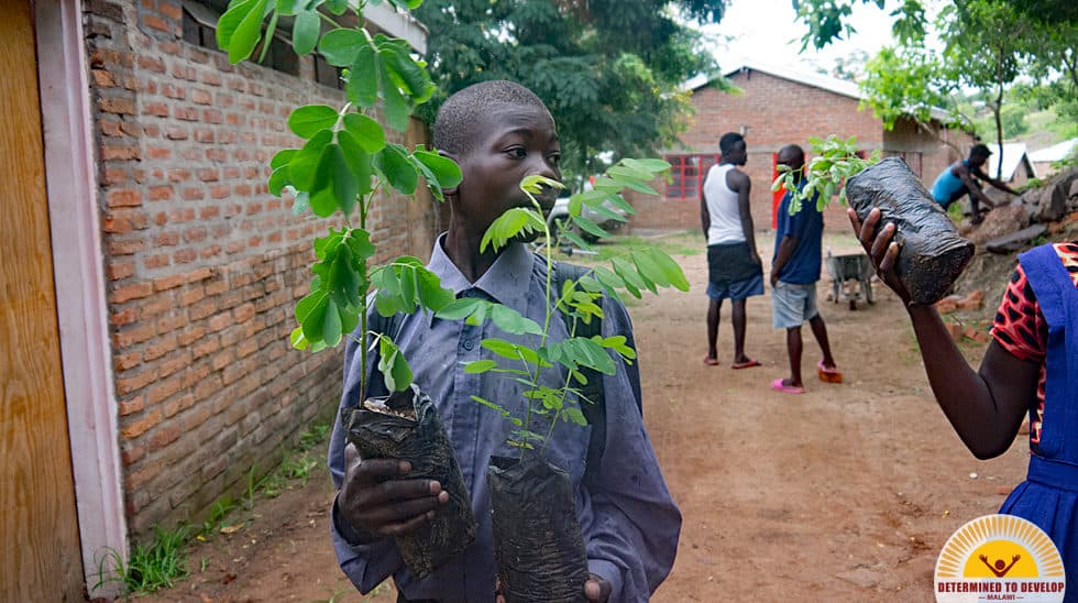 Determined to Develop Malawi Reforestation 3