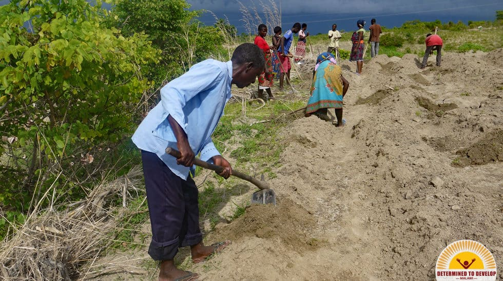 Determined to Develop Malawi Reforestation 4