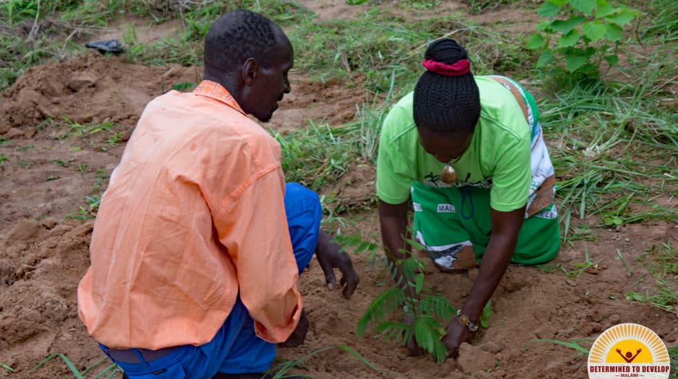 Determined to Develop Malawi Reforestation 6