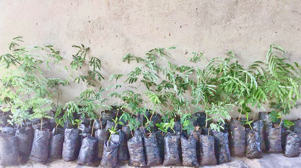 Determined to Develop Malawi Reforestation