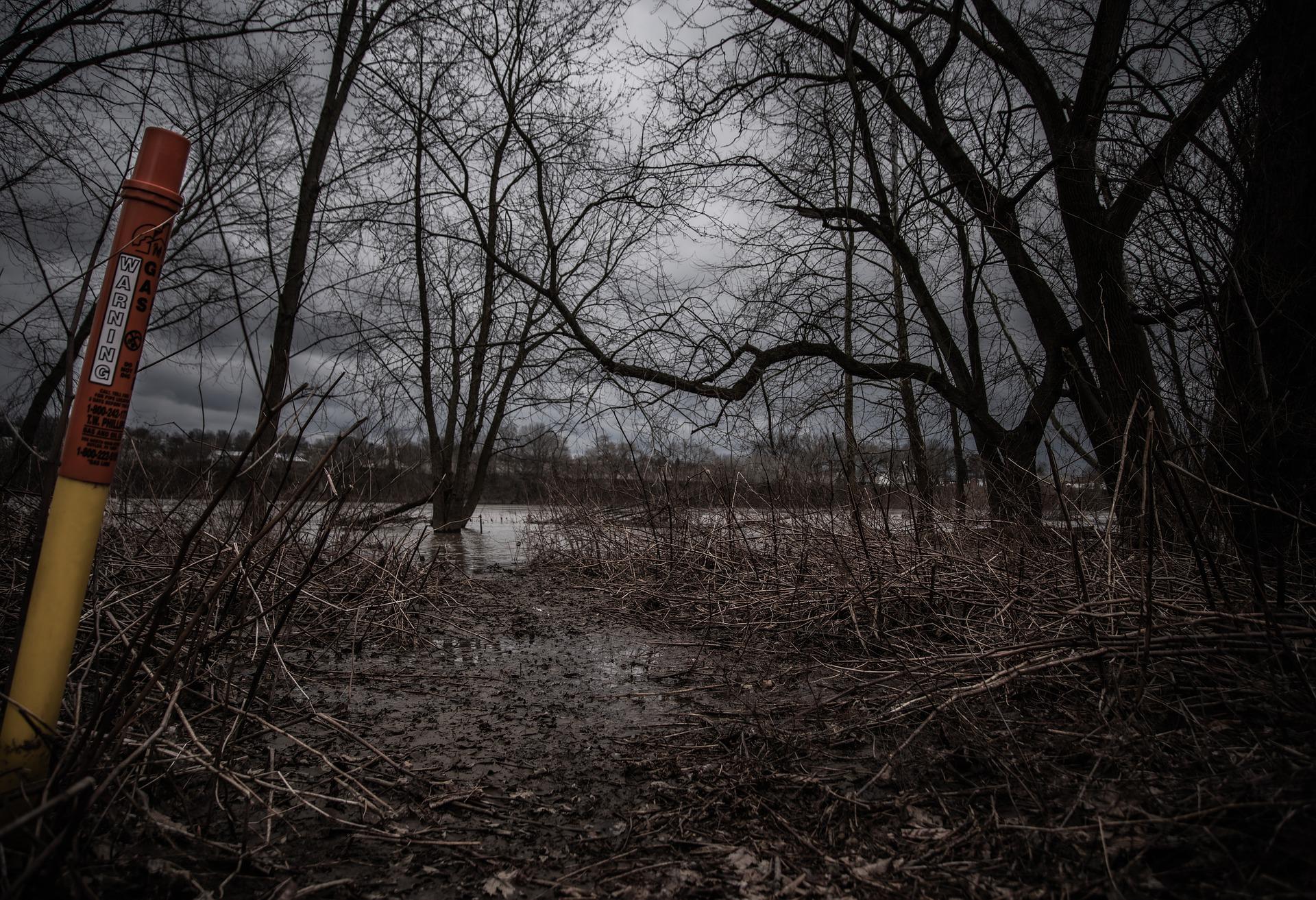 """HEMP"" and the healing of Chernobyl"