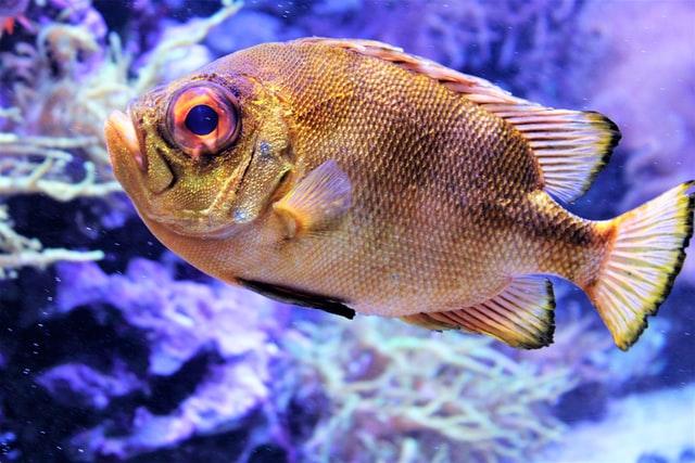 fish food poisoning