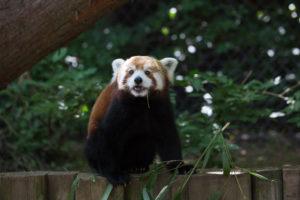 Friends of Capron Park Zoo
