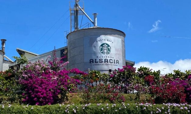 Starbucks First Coffee Farm