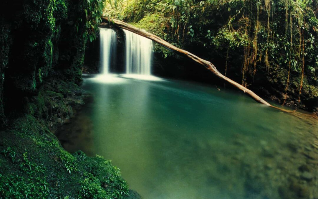 Experience The Magic of Ancient Costa Rica at Braulio Carillo National Park