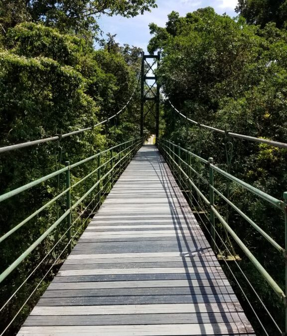 Research On Tropical Rainforests Flourishes In Costa Rica's Caribbean Lowlands