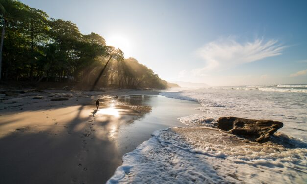 Ten Dog Friendly Beaches