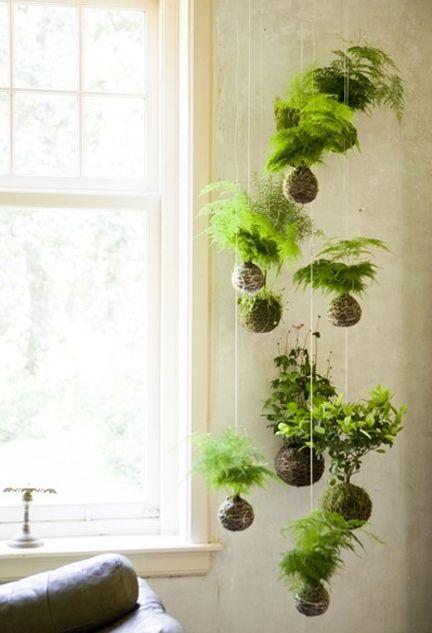 Decoración con plantas colgantes en ventanas