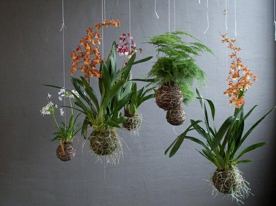 Decoración con plantas con flor colgantes
