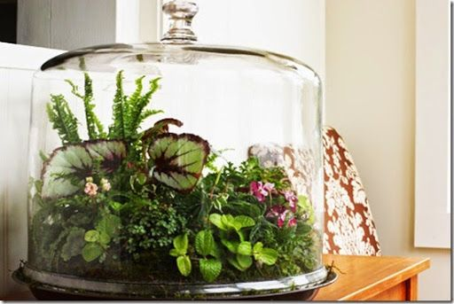 Decoración con plantas en terrarios exóticos