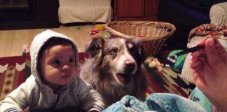 """Intenta hacer que su bebé diga """"Mamá"""" pero el perro se adelanta"""