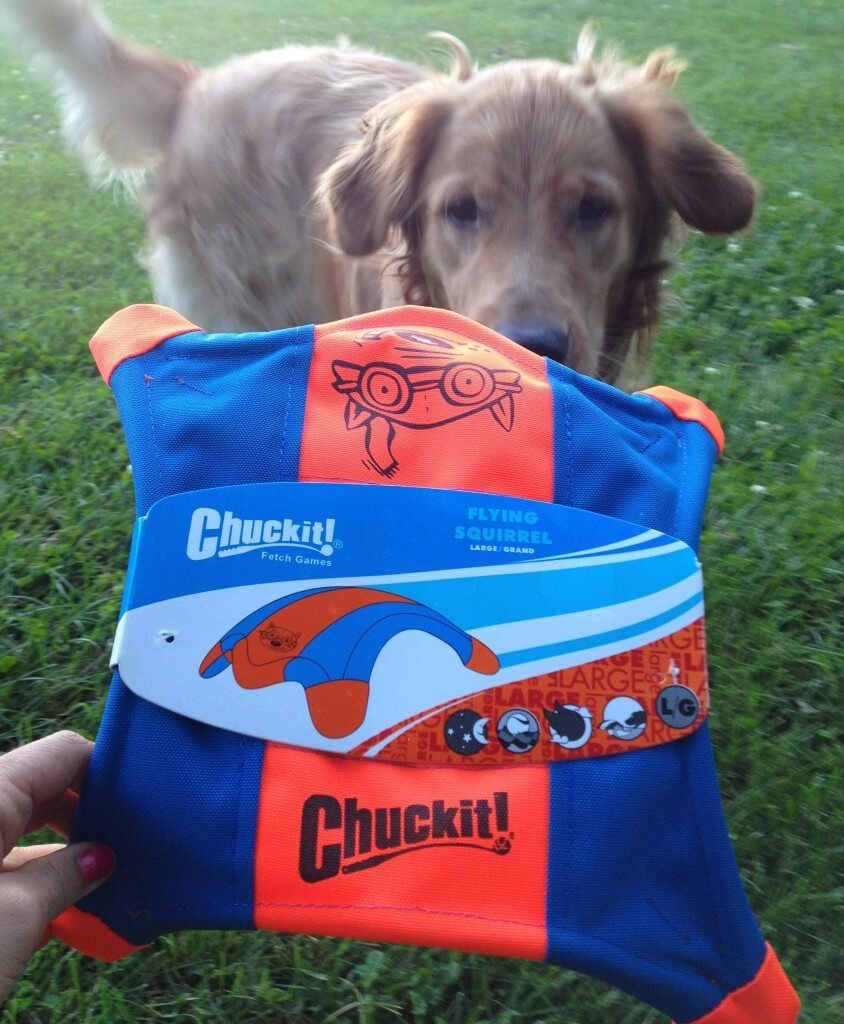 Charlie with the Chuckit!