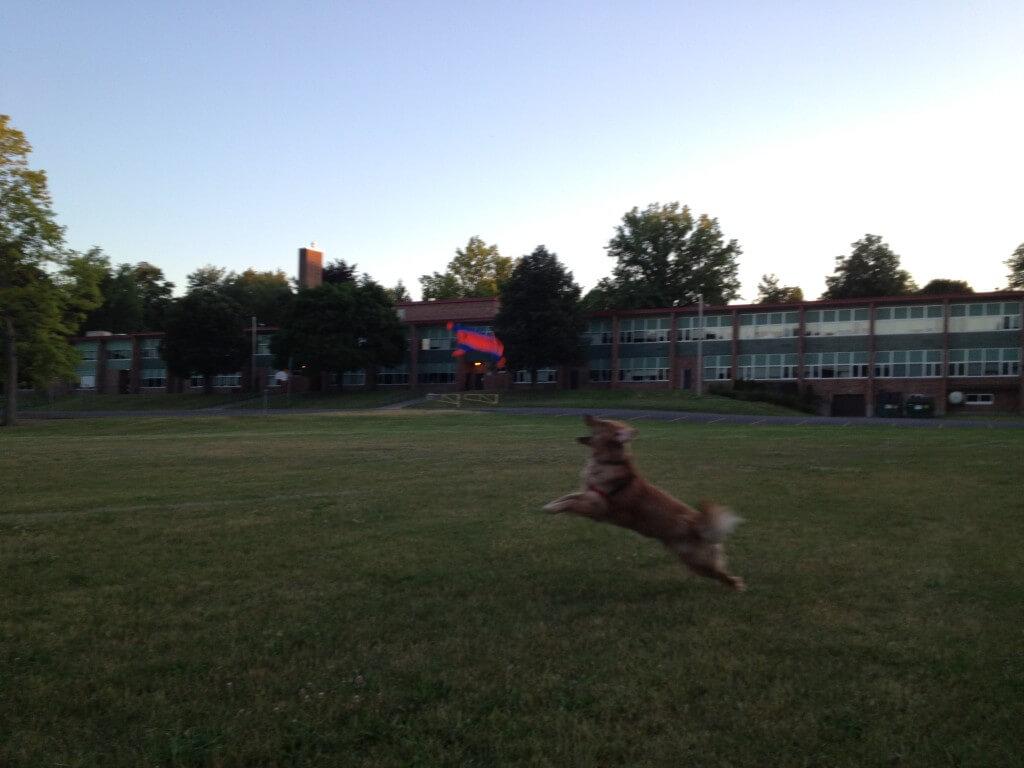 Chuckit! Flying Squirrel