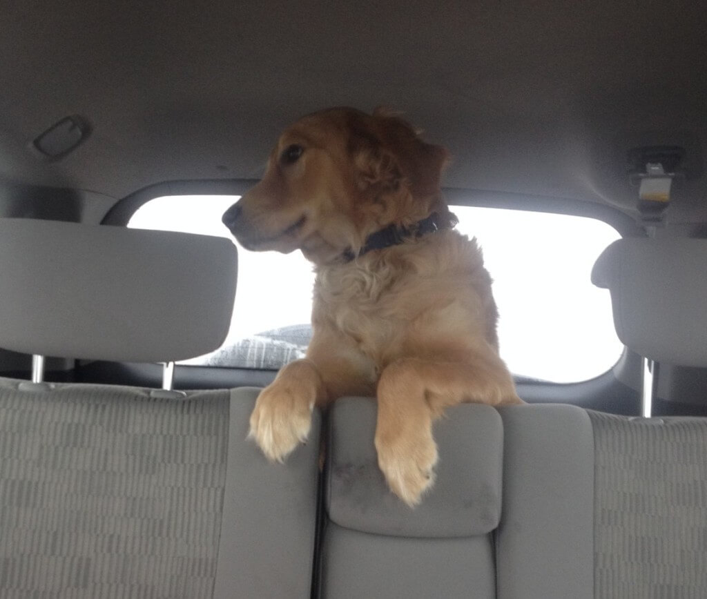 The Car Ride Home