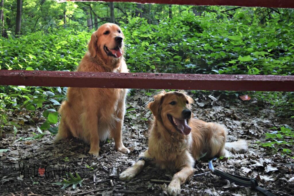 MyDogLIkes resident dog product testers, Harley and Charlie!