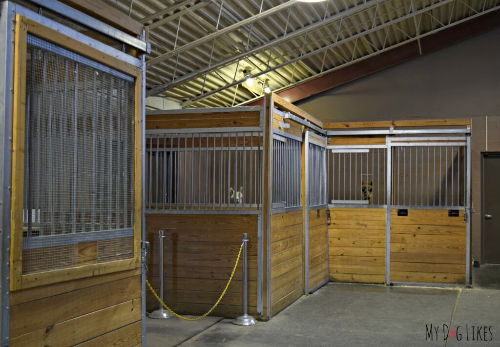 Llamas in the stalls at Lollypop Farm in Rochester, NY