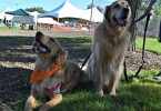 Harley and Charlie had so much fun at Lollypop Farm's Barktober Fest