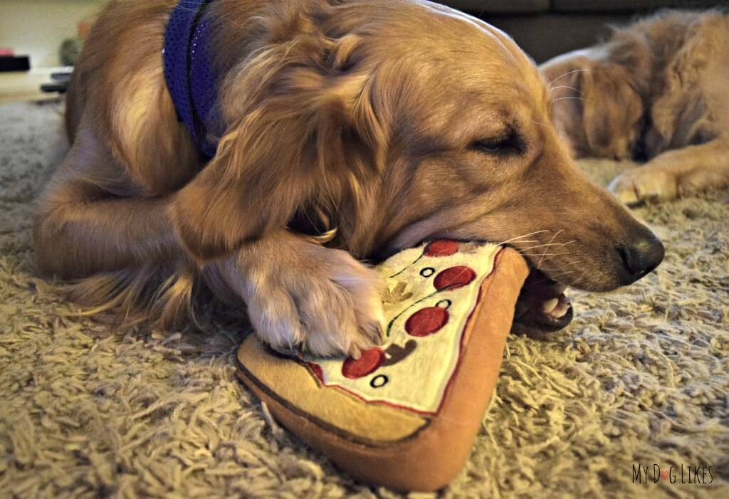 Charlie having a great time mouthing his PrideBites Pizza dog toy for our PrideBites review
