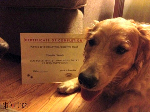 Charlie is a new graduate of Paws-I-Tive Behavior teen puppy class!