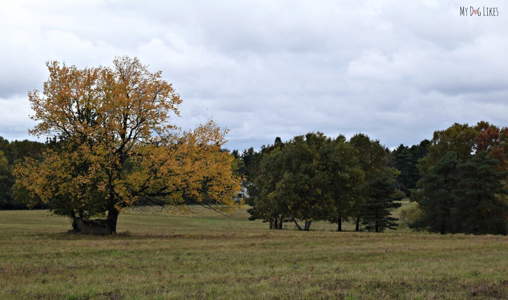 A beautiful fall shot from the Big Field Trail in Gosnell Big Woods Preserve near Rochester, NY