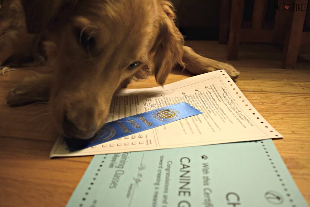 Charlie with his new Canine Good Citizen ribbon! After lots of hard work he passed!
