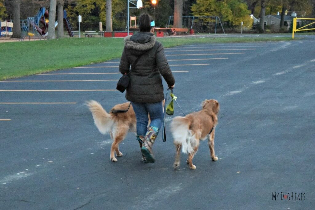 Testing out The Fifth Paw leash attachment on a walk with the boys!