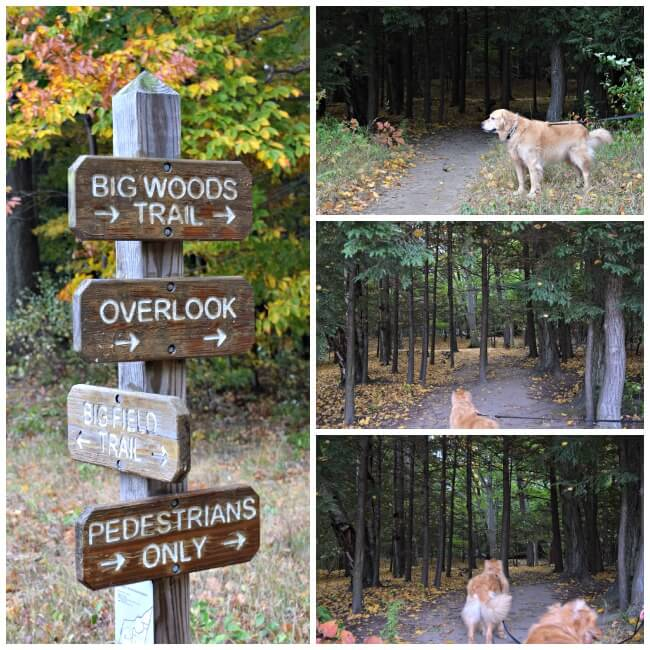 The entrance to the Big Woods Trail at Gosnell Big Woods in Webster, NY