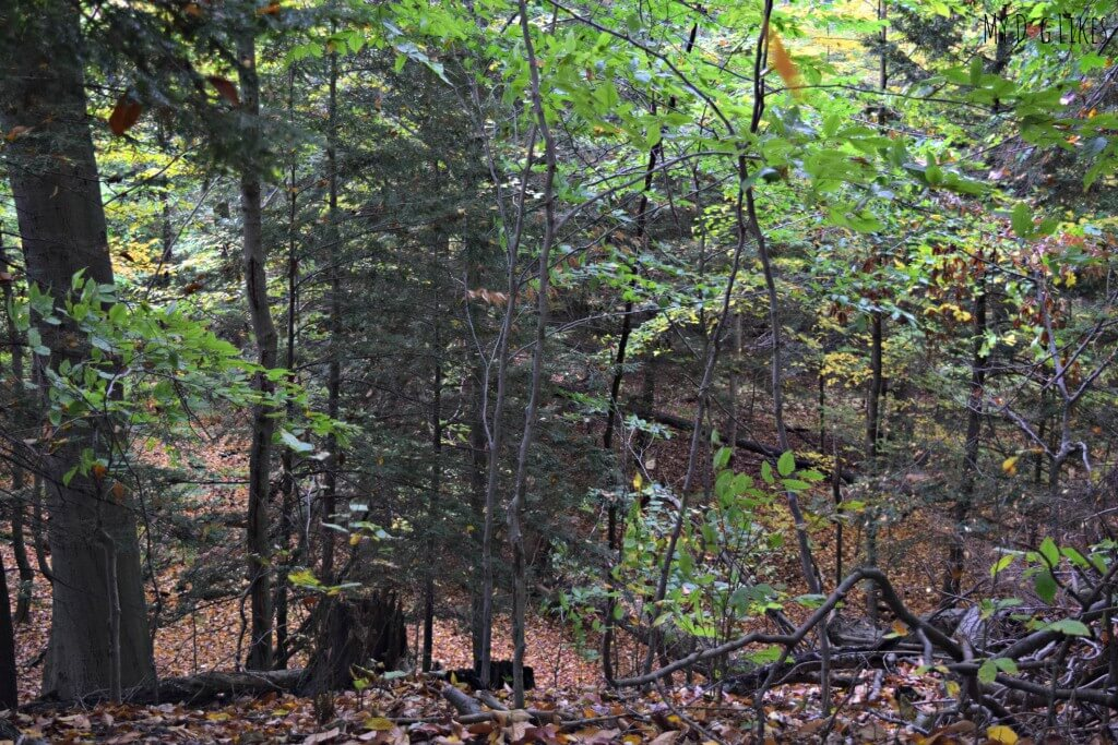 The end of the Overlook Trail at Gosnell Big Woods in Webster, NY