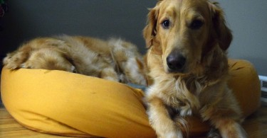 West Paw Design's bumper dog bed review from MyDogLikes