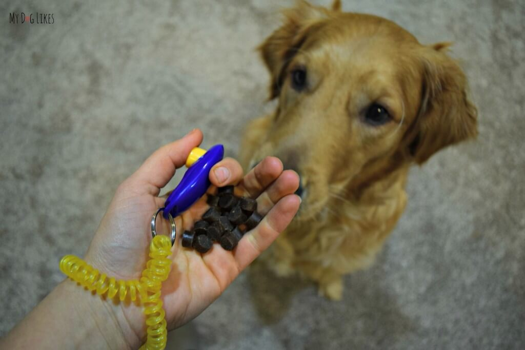 We use Zuke's Mini Naturals as a reward during clicker training with our Golden Retriever, Charlie
