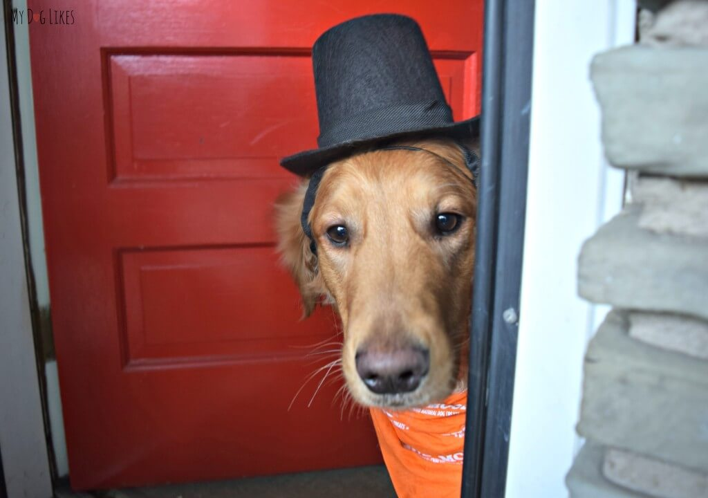 Charlie thinks a dog top hat is enough to get him into the exclusive dog party!