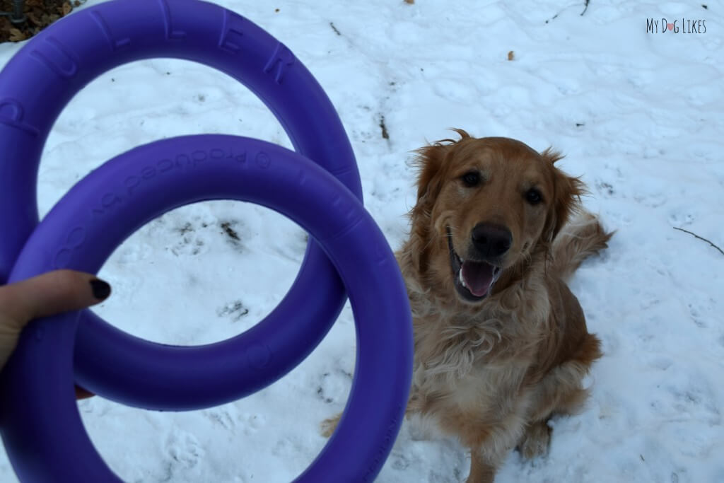 Looking for some great toys for big dogs? Check out the Puller by Collar! This toy is versatile, tough and unique!