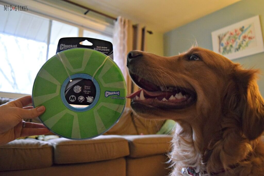 Charlie receiving his new frisbee on Christmas morning! Click here to read our thoughts in our official Chuckit Zipflight review!