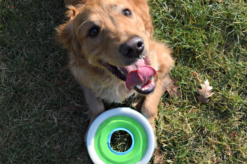 The Zipflight is without a doubt amoung the best frisbees for dogs