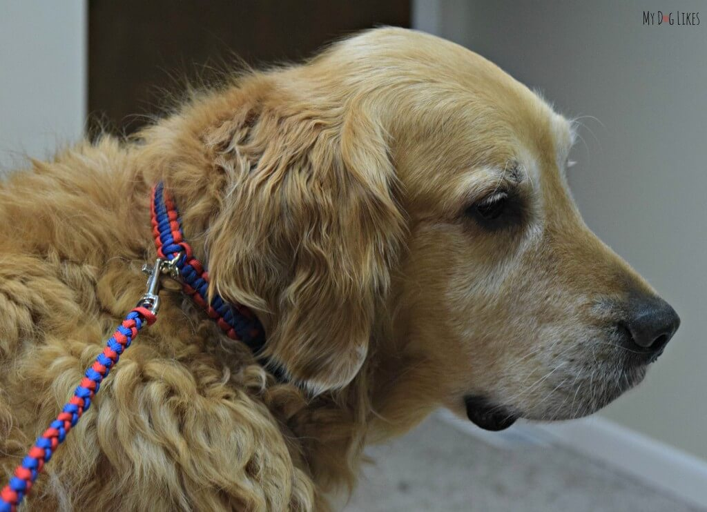 Pudin's Paw makes beautiful homemade dog collars and leashes from braided paracord