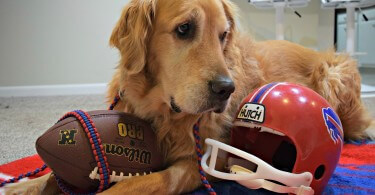 Our Buffalo Bills inspired Paracord Dog Leash and collar from Pudin's Paw!