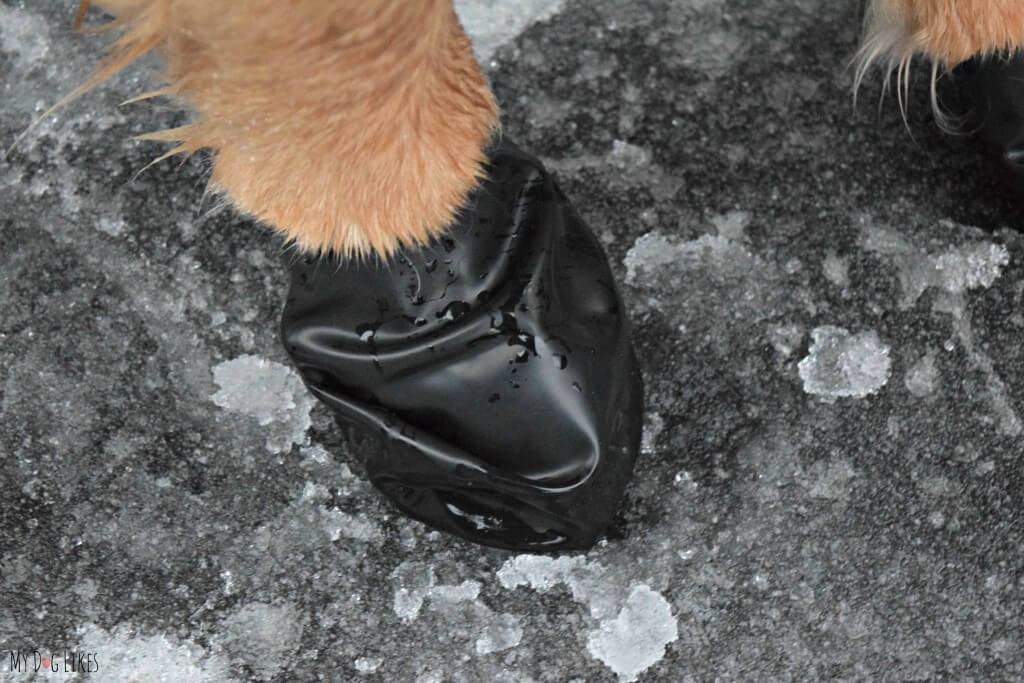 Make sure to use pet safe ice melt on your sidewalk and driveway for the safety of your furry friend!