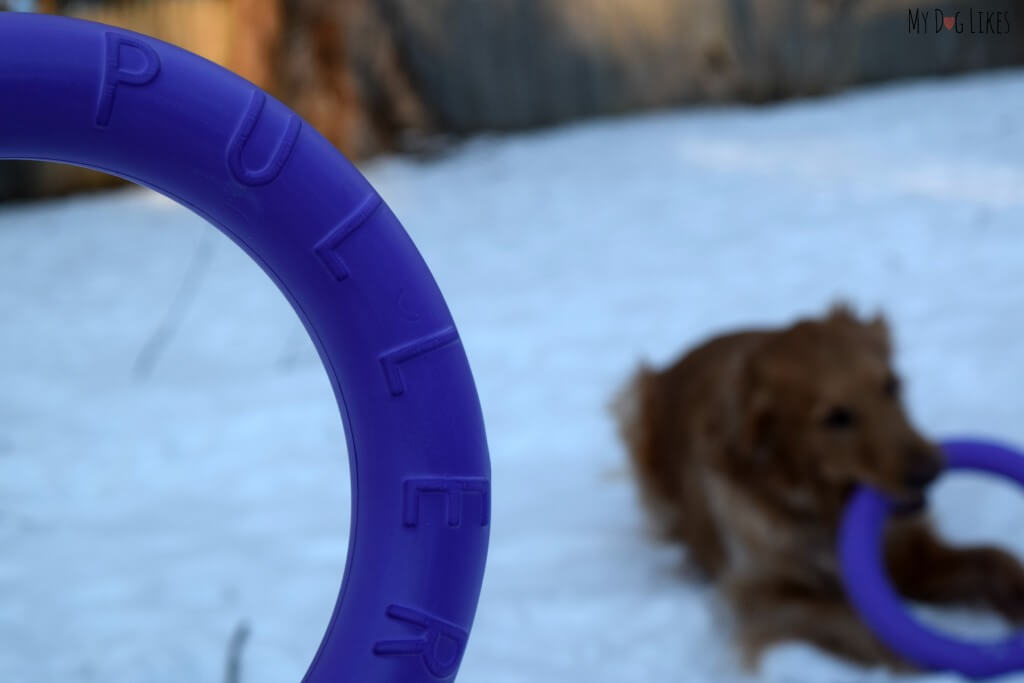 The Puller is constructed of a dense foam that can withstand heavy duty play and even a bit of chewing!