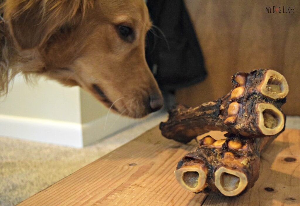 Charlie giving the Merrick Sarge Bone a sniff! Visit MyDogLikes for our official review!