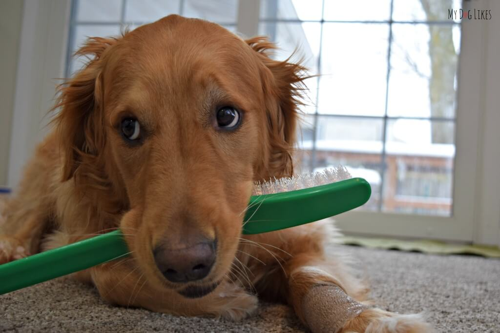 """Charlie is unsure what to do with his prop Dog Toothbrush! """"How am I supposed to fit this thing in my mouth!"""""""