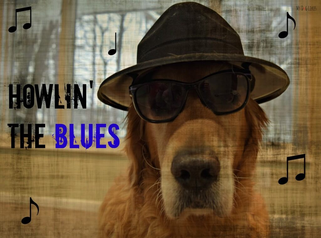 """See what has Harley """"Howlin' the Blues' over at MyDogLikes!"""